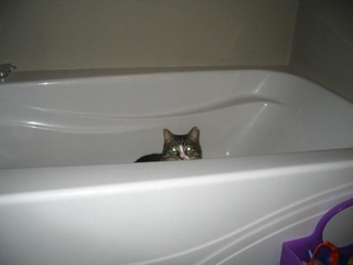 kitty in tub